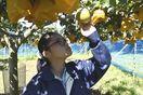 池田高三好校生が栽培 自慢のナシきょう販売