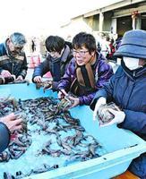 アシアカエビをパックに詰める参加者=小松島市南小松島町の小松島漁協