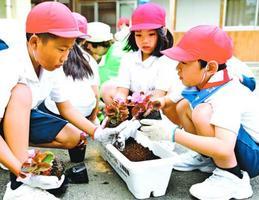 贈られたベゴニアなどをプランターに植える児童=三好市井川町の辻小