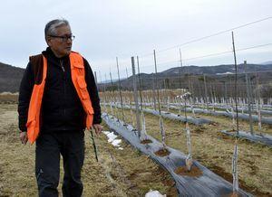 地域おこし協力隊としてワイン用のブドウ栽培に取り組む横田さん=福島県川内村
