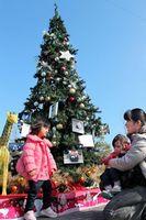動物の写真が飾られた4メートルのクリスマスツリー=徳島市のとくしま動物園