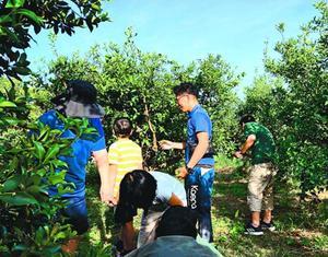 スダチを収穫する子どもと職員=9月、徳島市上八万町上中筋の農園(なのはな徳島提供)