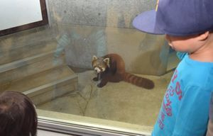 みたらしを見詰める子ども=とくしま動物園