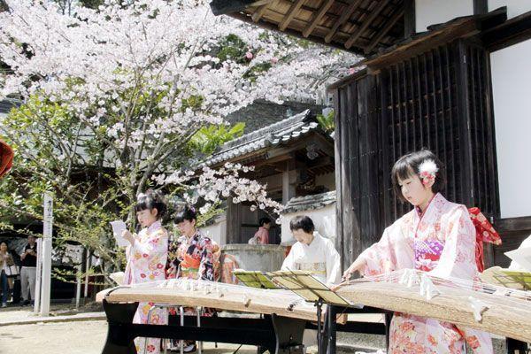 薬王寺境内に琴の音色を響かせる花衣会のメンバー=美波町奥河内
