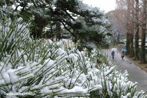 うっすらと雪が降り積もった徳島中央公園  =17日正午ごろ、徳島市徳島町城内1