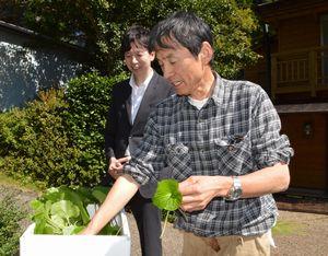ドイツに持って行く葉わさびを選別する多田さん(右)と大畑さん=上勝町生実