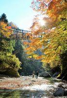 県観光協会のツアーで訪れる祖谷のかずら橋(同協会提供)