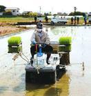 コウノトリ餌場で酒造用に米植える 鳴門で北島のNPO