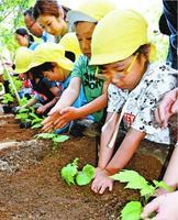 ゴーヤーの苗を植える園児=徳島市のときわプラザ