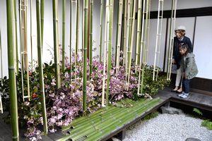 大胆な造形作品も並んだ華道展=美馬市脇町の吉田家住宅