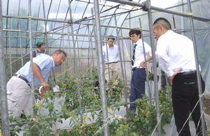 かあちゃん野菜の生産農家を視察する百貨店の担当者ら=美馬市脇町