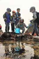 海辺の生き物を観察する親子連れ=阿南市大潟町