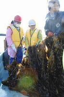 漁協組合員と一緒にワカメを引き揚げる児童ら=阿南市の出島海岸沖