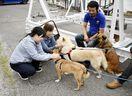 犬猫1400匹里親の元へ 徳島市のNPO「HEAR…