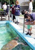 67歳の誕生日を迎え来館者から祝福を受ける浜太郎=美波町の日和佐うみがめ博物館カレッタ