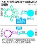 オプジーボの糸口・タンパク質PD1 正常な免疫機能…