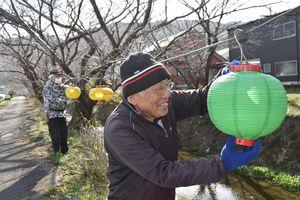 桜並木にちょうちんを飾り付ける生名ロマンの会の会員=勝浦町生名