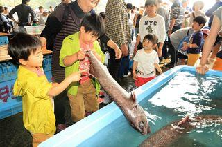 魚の触感に「ギョギョ」 阿南市