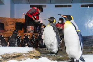 7日、台湾・桃園市にオープンした水族館「Xpark」で、人工雪の中に立つペンギン。奥は餌を与える飼育員(共同)