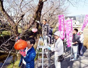 桜の木にちょうちんを取り付ける生名ロマンの会の会員ら=勝浦町生名
