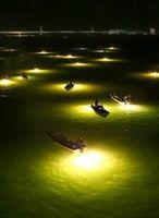 最盛期を迎えたシラスウナギ漁。今季から漁期が短縮された=徳島市の吉野川大橋付近