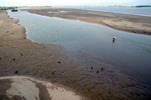 吉野川橋西側に広がる砂州。城ノ内高のヨット研修に支障が出ている=1日、徳島市