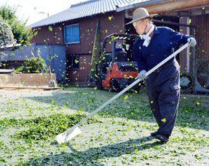 細かく刻んだ藍の葉を乾燥させる「藍こなし」の作業に取り組む職人=上板町下六條の佐藤阿波藍製造所