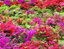 花紀行 初夏の色 鮮やか
