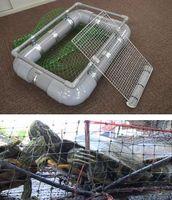 [上]栄工製作所が開発したミドリガメの捕獲器[下]鳴門市内で捕獲されたミドリガメ。緑がかった体が特徴だ