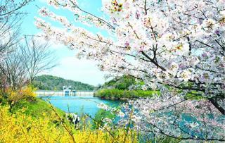 桜名所ガイド2020(4)四国