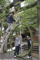 日和佐八幡神社に「茅の輪」設置、30日に「大祓」 …
