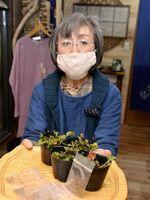 フランス菊を咲かせて震災の教訓を伝える活動に取り組む佐藤さん=吉野川市鴨島町麻植塚の「和みギャラリー風の庵」