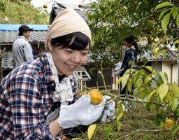 黄色く色付いたユズを収穫して笑顔を浮かべる参加者=海陽町日比原