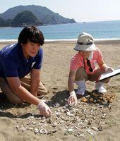 アカウミガメの卵のふ化率を調査するカレッタの学芸員=美波町日和佐浦の大浜海岸