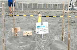 千葉の五輪会場でウミガメ産卵