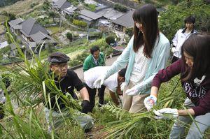 南さん(左端)からカヤの刈り方を教わる立教大の学生=三好市東祖谷落合