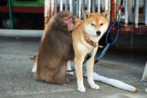 飼い犬とじゃれ合うサル=阿南市津乃峰町戎山の北岡さん宅