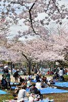 桜の下で花見を楽しむ人たち=徳島中央公園