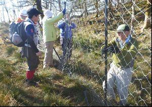 オオヤマレンゲをシカの食害から防ぐため防護ネットを設置する剣山クラブの会員=2012年10月29日、剣山山系