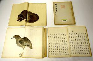 牛打坊(左上)やサンカノゴイ(左下)などを掲載した阿淡産志の写本=徳島市立図書館