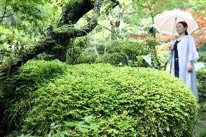 雨にぬれ鮮やかさを増すコケ=徳島市東山手町3の瑞巌寺