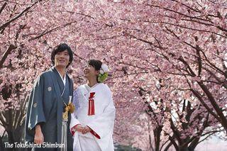 蜂須賀桜満開 徳島中央公園の助任川沿い