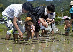 田植えを体験するSOの社員や家族連れら=美波町恵比須浜