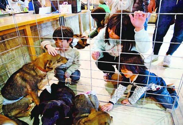 保護された犬と触れ合う子ども=徳島市のアクア・チッタ第2倉庫