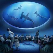 四国水族館4月13日グランドオープン 四国4 県在住者は1 日から入場可能に【動画あり】