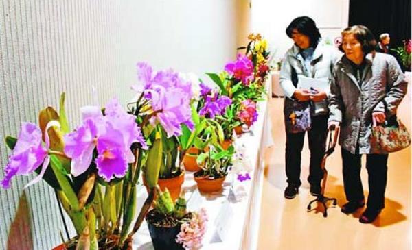 色とりどりの花が並ぶ徳島洋蘭展=板野町那東のあすたむらんど徳島