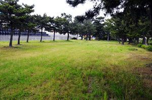 徳島市がドッグランの整備を計画している小松海岸緑地の一角=同市川内町旭野