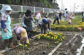 完成記念イベントに向けて、花の苗植えを行う会員ら=阿南市羽ノ浦町宮倉