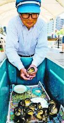 新町川にアイガモひな9羽誕生 水際公園で人気に