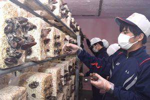 キクラゲ栽培施設で収穫を体験するみなと高等学園の生徒=小松島市大林町